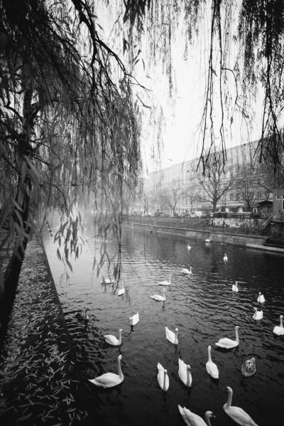 Selbst Kreuzberg kann Melancholie: Winterstimmung am Paul-Lincke-Ufer Foto: Lena Ganssmann