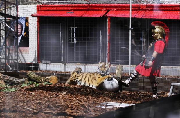 Römische Zustände: Friss den Flüchtling, Tiger! – Foto: Ute Langkafel