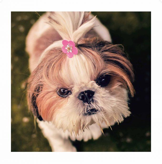 Was die Hundebaby mit dem Ganzen zu tun haben? Wir haben keine Ahnung...Foto: pop Kultur