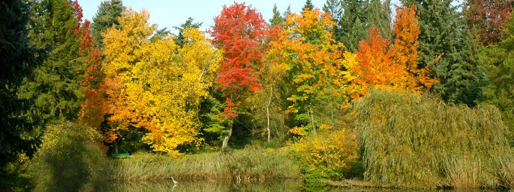 Botanischer Garten Berlin Herbst am Amerikasee