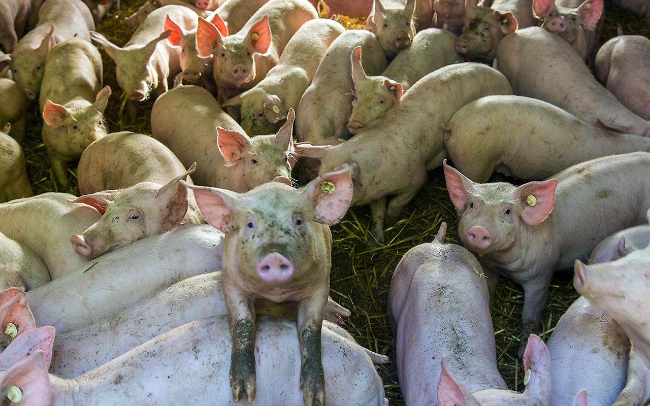 Veganismus ist mehr als nur ein Lifestyle-Trend - ZITTY